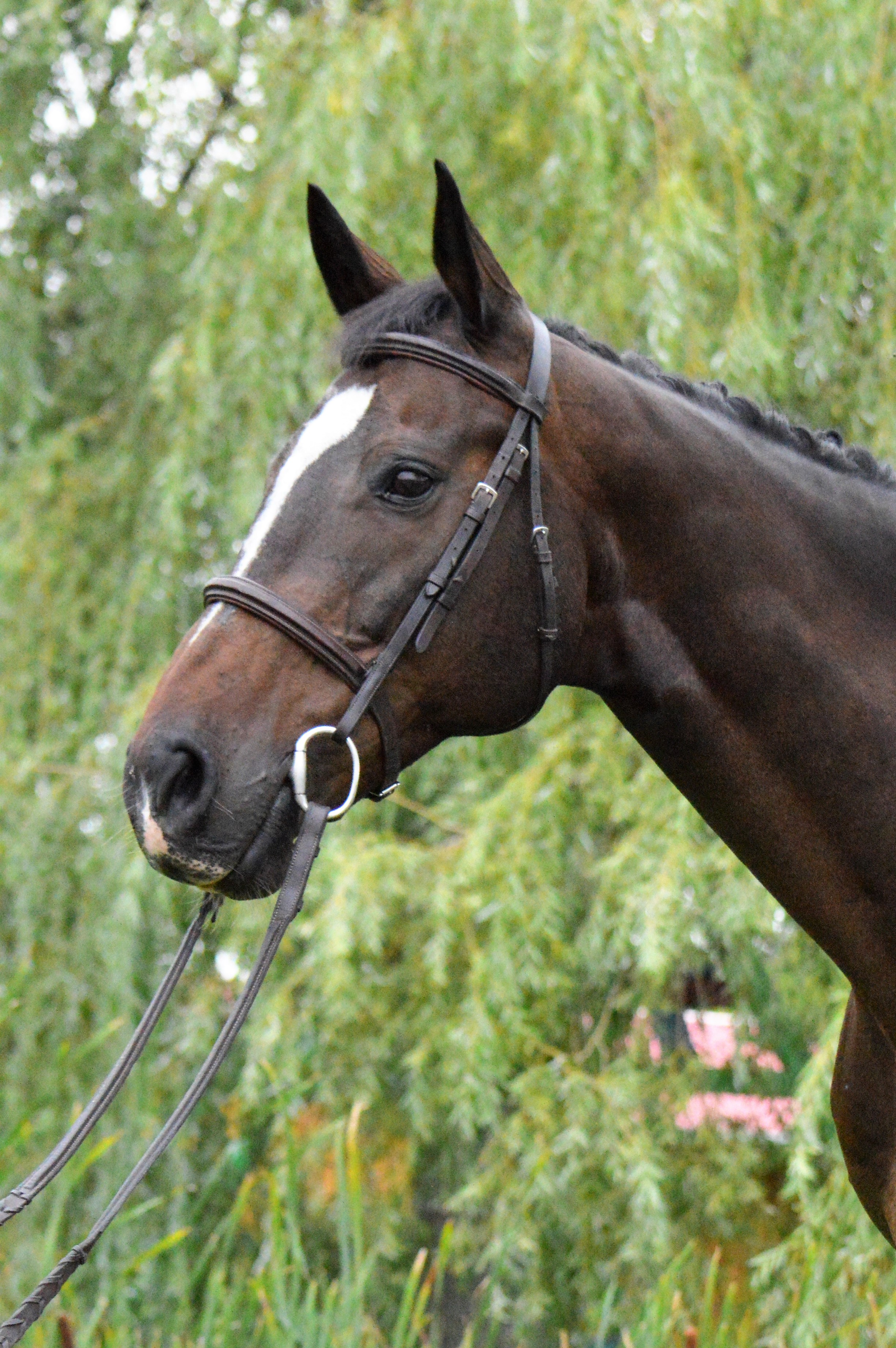 Cappy cheval sherbrooke